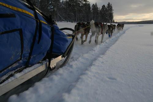 Husky-speed över Pielnejaure i Svenska Lappland!