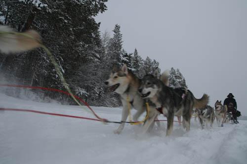 Volkers hundspann i full fart nere på Skabramsjön.