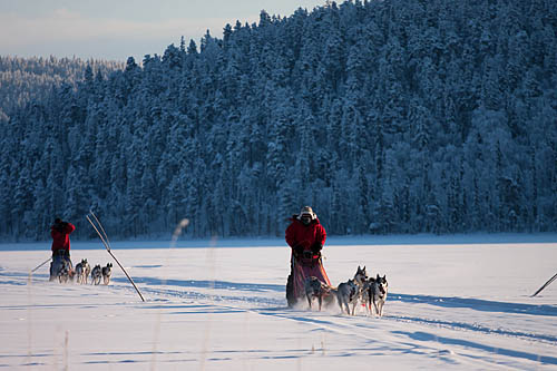 a9b623b7c8d Jokkmokkguiderna – Dog sledding adventures